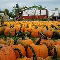 Pumpkin Festival Haverhill MA