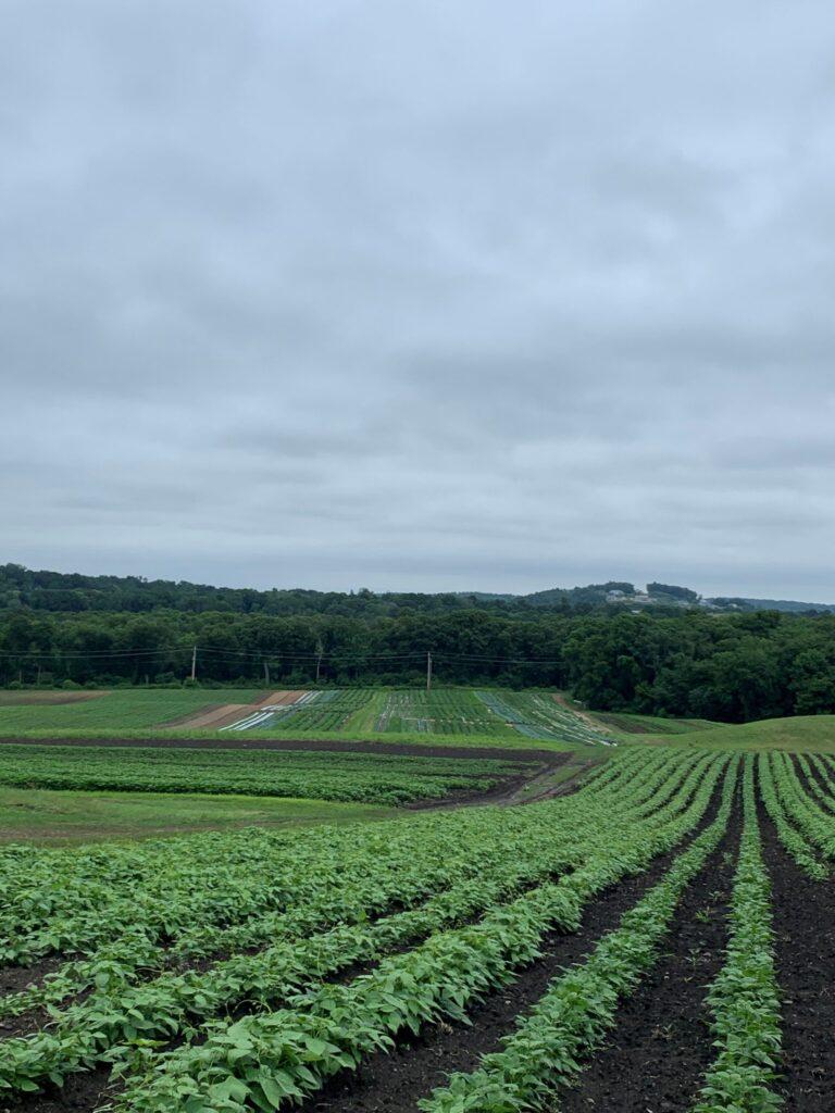 Haverhill Field